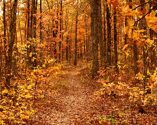 Path Through The Woods a Path in The Autumn Woods