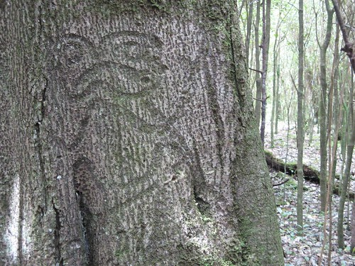 Moriori tree carving rosie wayper flickr