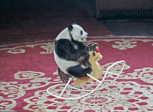 Panda on Rocking Chair | by f0rbe5