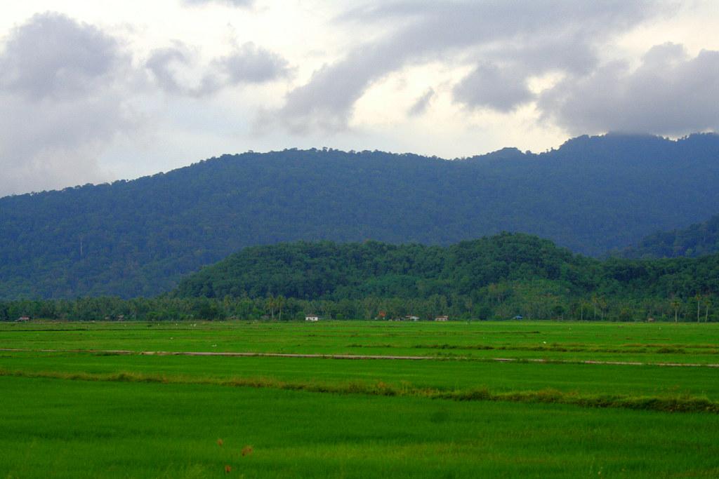 Sawah Padi Langkawi Kedah Malaysia Phalinn Ooi Flickr