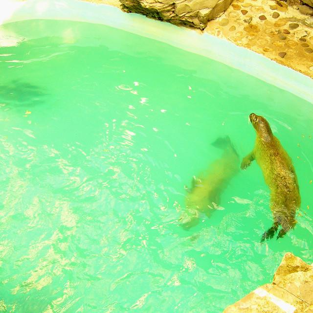 Aquarium Of Niagara Falls 17 Linden Tea Flickr