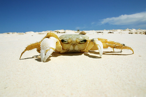 Crab | by Ronski3
