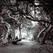 Through the Trees Darkly