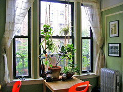 window of plants and more mismatched chairs | by wockerjabby