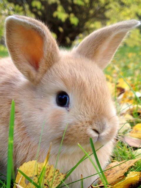 cute bunny my sister s bunny madeleine flickr