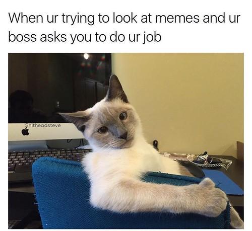 memes.jpg