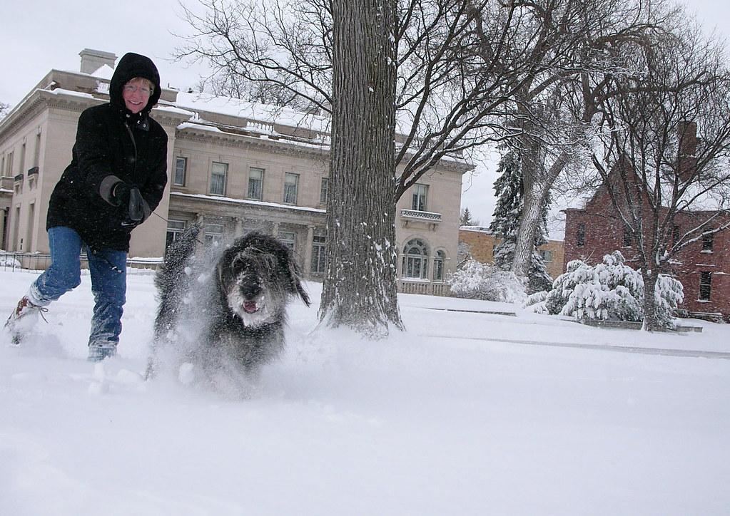 Woman Taking Dog On Walk