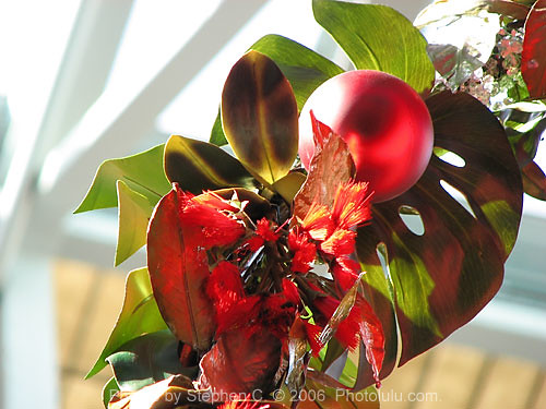 hawaiian christmas decorations by photoluluguy hawaiian christmas decorations by photoluluguy