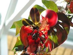hawaiian christmas decorations by photoluluguy