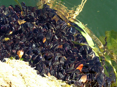 Mussels! | by steena