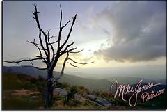 Shenandoah dead tree E3