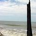 Tall Driftwood