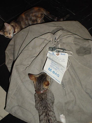 Kittens Mak & Fil with USPS M-Bag | by -Andrew-