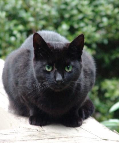 Blue Cat Eyes Tumblr