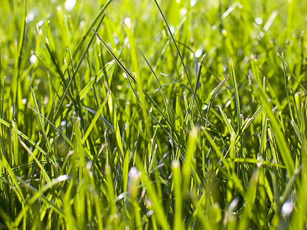 Close up grass | Grass looks cool from this angle and ...