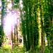 serendipitous trees