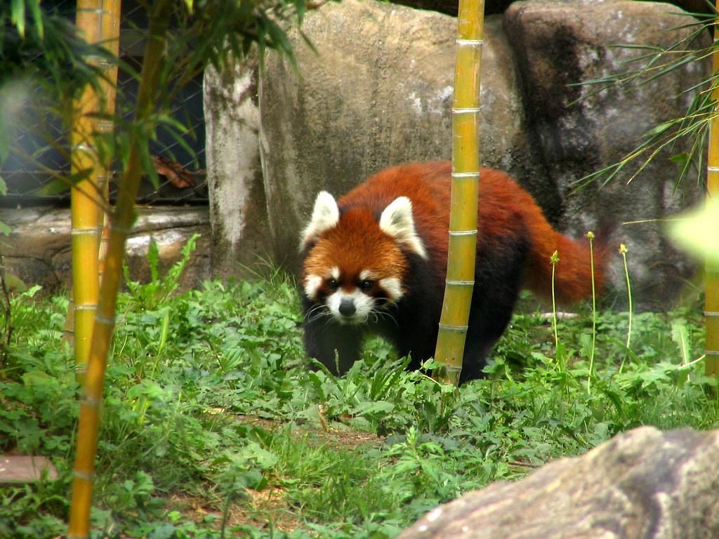 Panda Doesn T Like Chinese Food