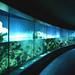Reef habitat