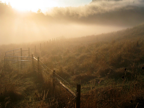gold morning | by dogsbody
