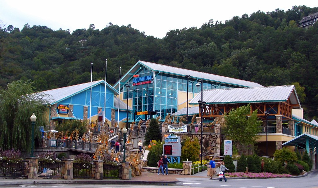 Image Result For Pigeon Forge Aquarium