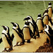 Wobble of the Penguins