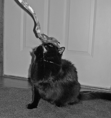 Cat On Back Batting Toy