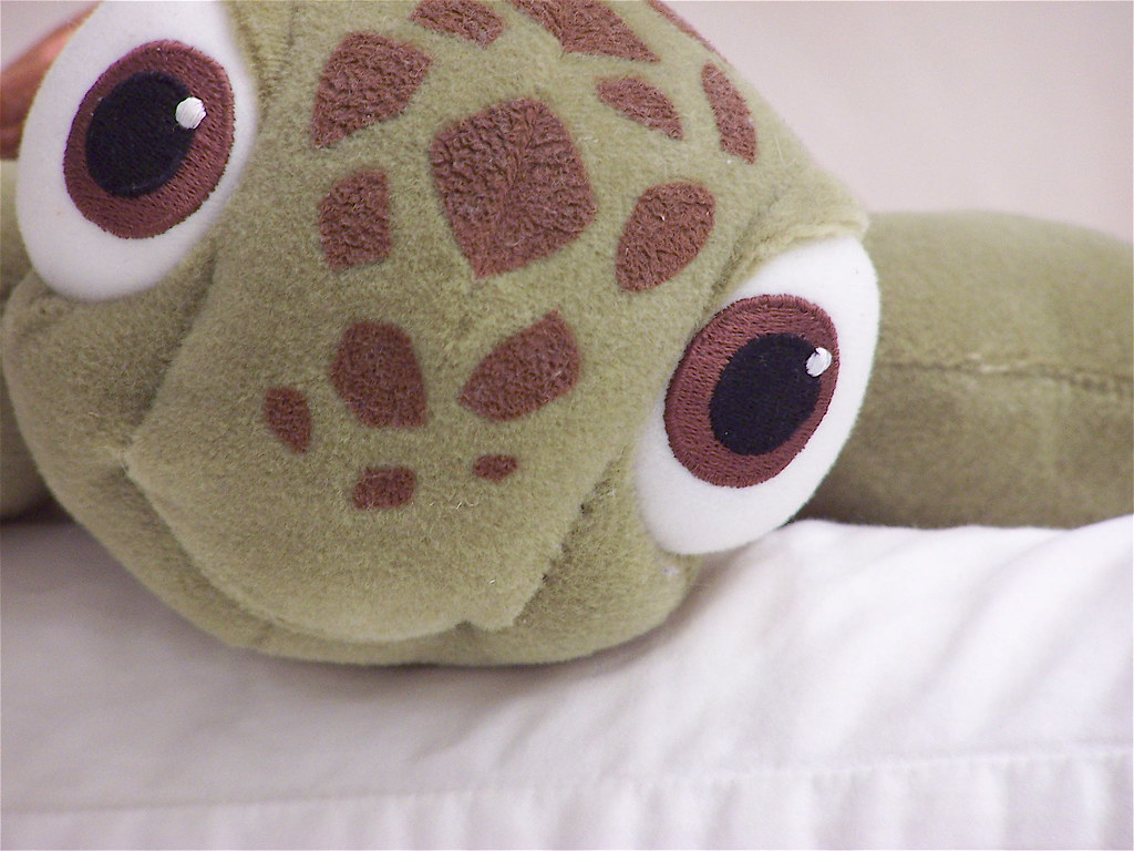 squirt | close up of a cute, stuffed baby sea turtle name