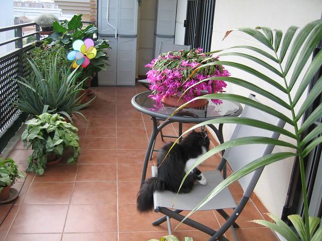 Mi cactus de navidad flickr photo sharing for Cactus de navidad