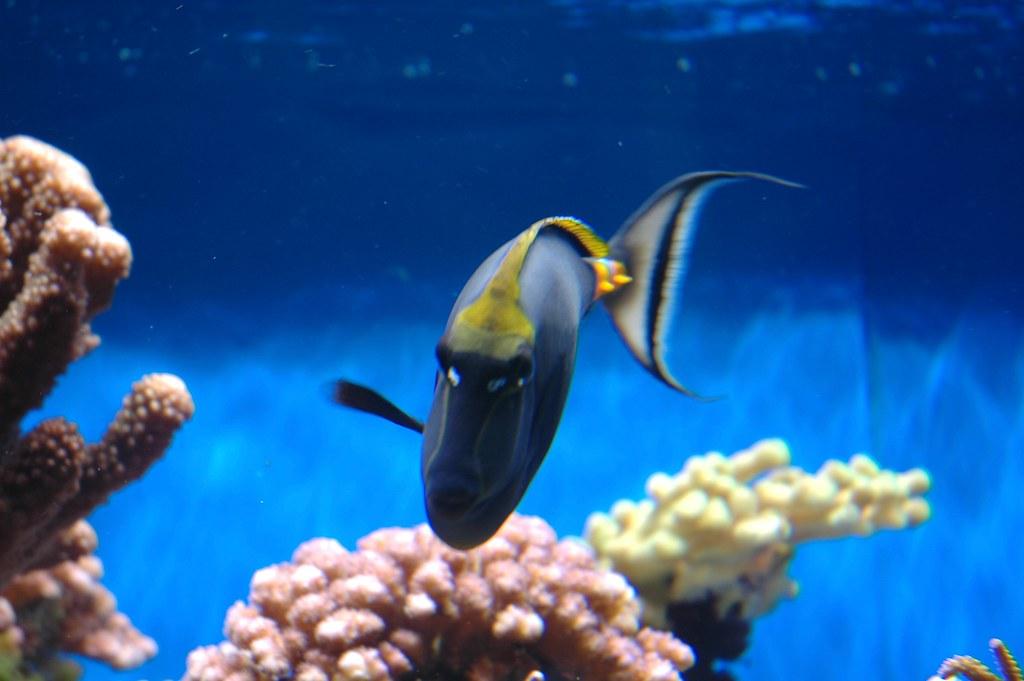 Blue Fish San Diego Birch Aquarium Scripps College