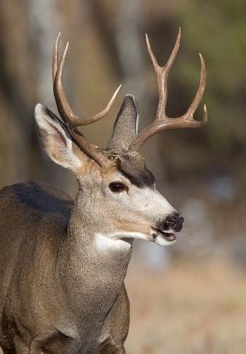 Big Buck | by the holdens photos