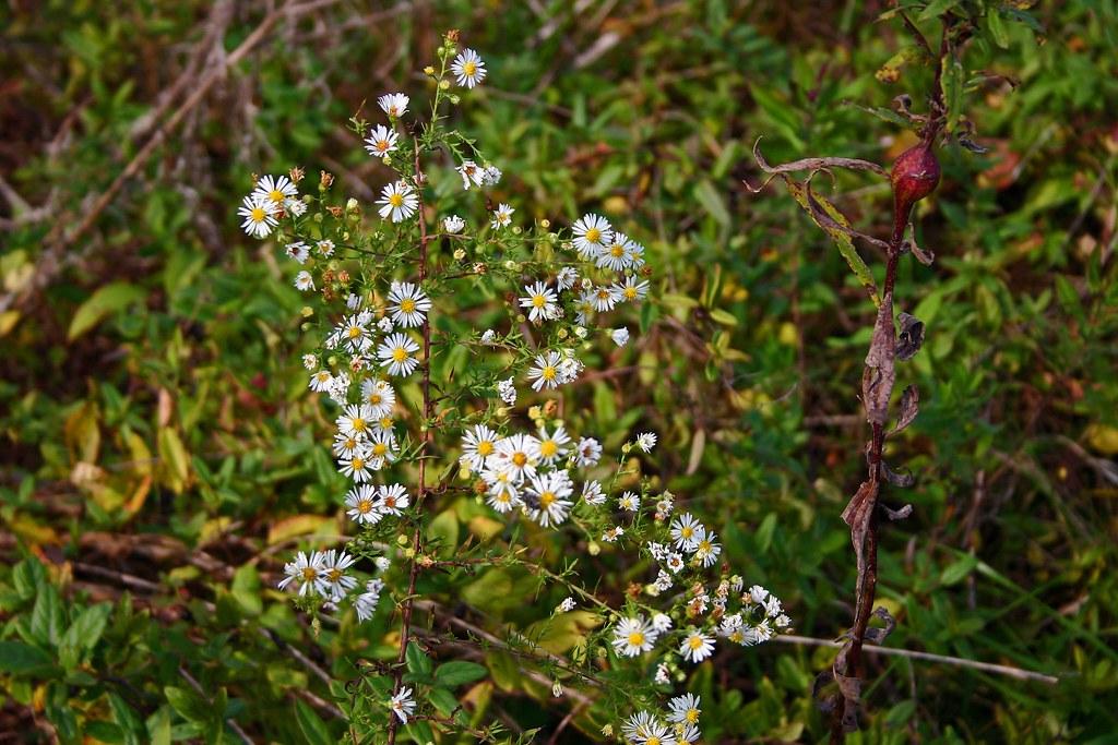 Weeds With White Flowers Ii Jason Presser Flickr