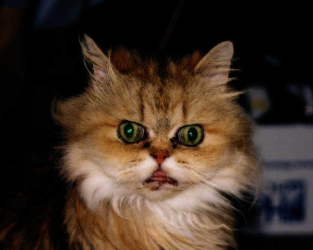 Creepy Hairless Cat Video