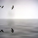 (birds*)