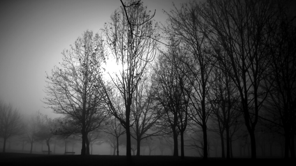 Black and white foggy trees in a cold evening in venaria reale by dino olivieri