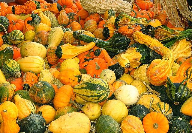 decorative squash courge d corative autumn at march