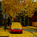 Red car with ginkgo leaves
