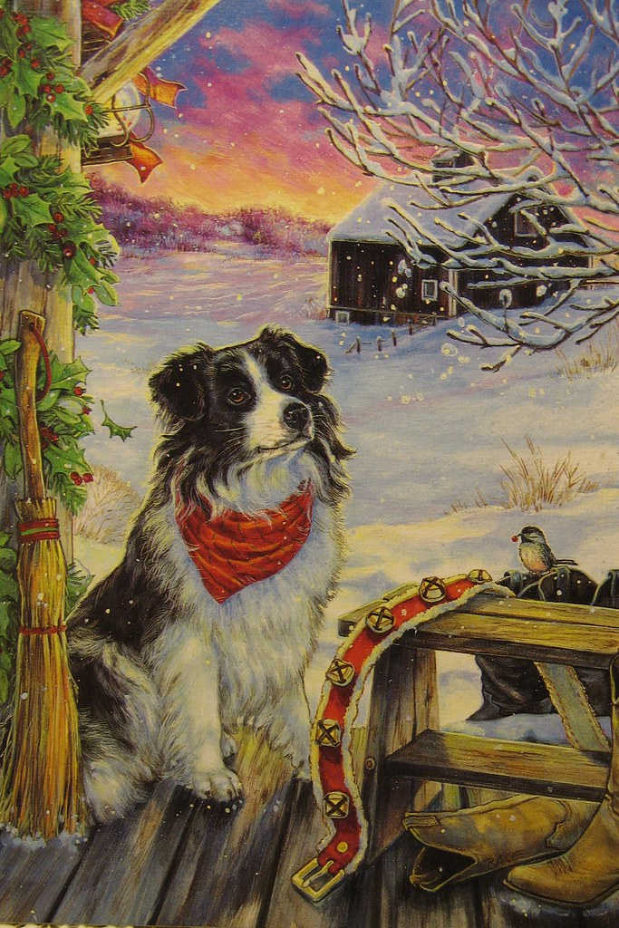 Border Collie Christmas Card | I received this card some yea… | Flickr