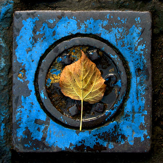 Yellow Leaf Blue | by The Glass Eye