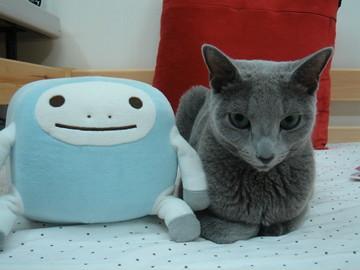 Russian Blue Niki Niki Is My Friend S Cat He Weighs Only Flickr