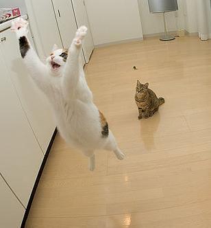 Et si nous étions des chats? - Page 2 298512891_c02cf7c2d4