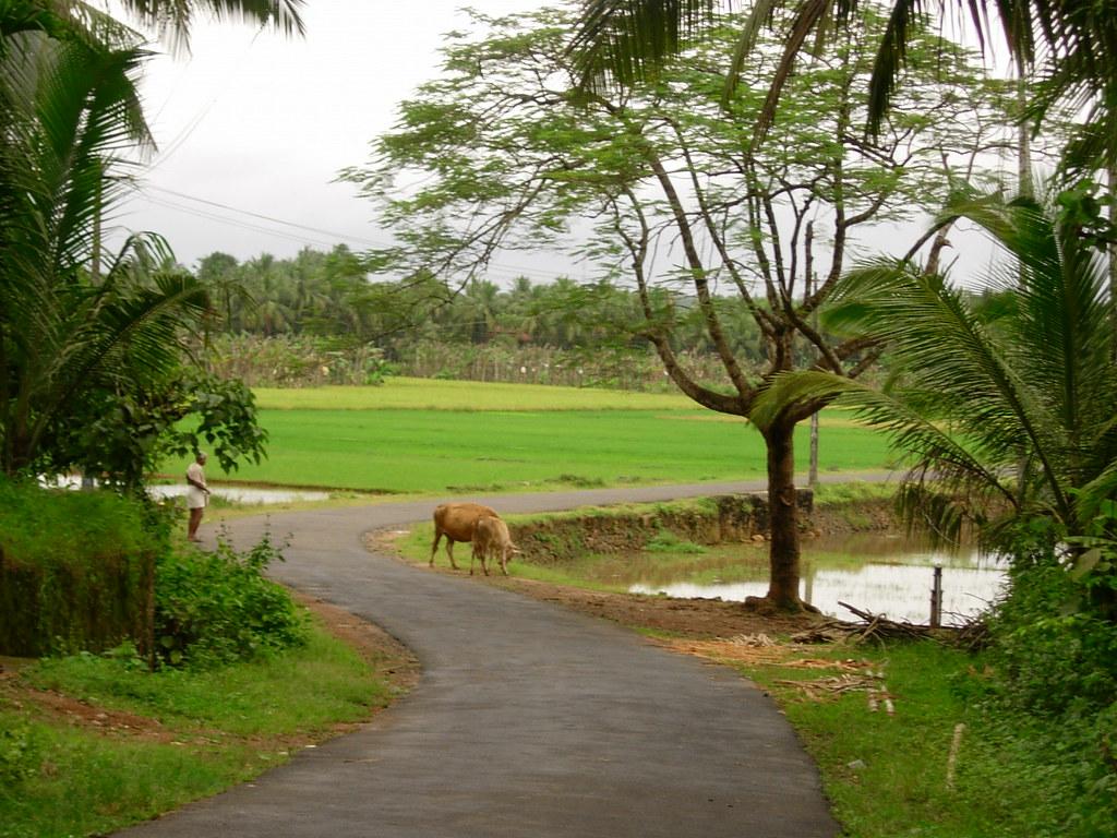 Natural Images Of Kerala