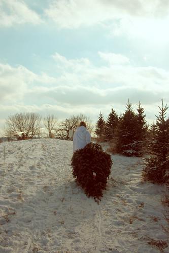 ... hanns christmas tree farm | by snapshotradio - Hanns Christmas Tree Farm Snapshotradio Flickr