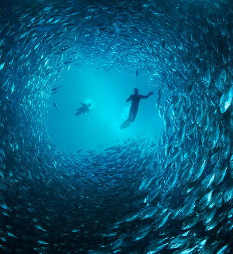 Tunnel of Fish | by Arne Kuilman