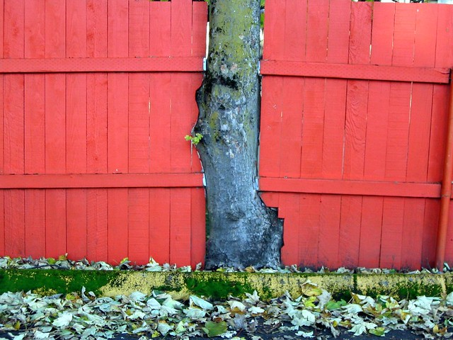 Fence Built Around Tree Portland Oregon I5prof Flickr
