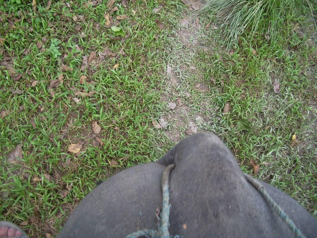 Elephant 39 s ass gerardo diego ontiveros flickr - Elephant assis ...