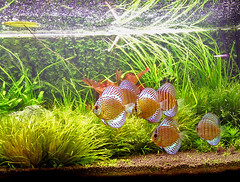 200L Aquarium 26-11-2006 | by Untitled No. 4