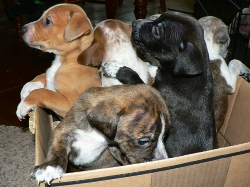 box full of puppies | by sheeshoo