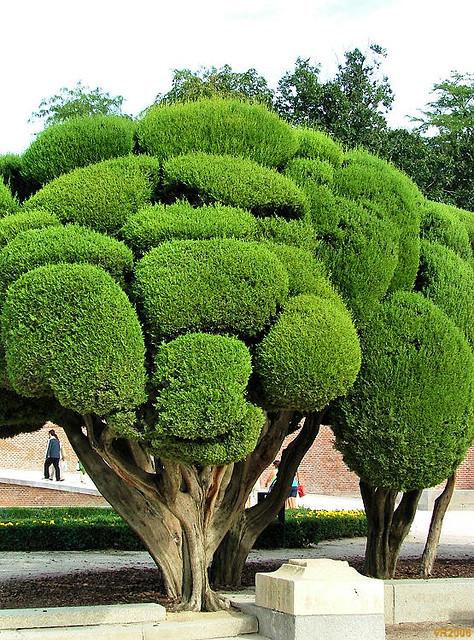 2006 madrid jardim retiro madrid espanha parque el for Arboles jardin hoja perenne