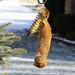 Squirrel Gymnastics