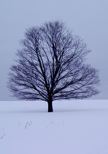 Tree on hill on overcast day | by ann j p